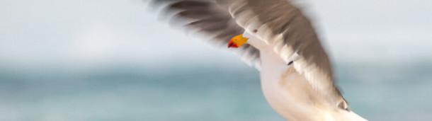 一号站官方: 疫情之下,鸟类联结世界——2020年度鸟类摄影师大赛奖项公布