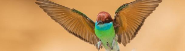 一号站平台登录: 飞羽瞬间!22幅精彩绝伦的鸟类飞翔作品展现生态摄影之美