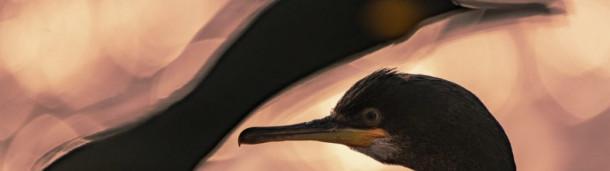 一号站平台登录: 疫情之下,鸟类联结世界——2020年度鸟类摄影师大赛奖项公布