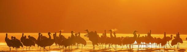 一号站官方: 爱鸟影廊 | 迎着太阳,那一抹霞光中的身影
