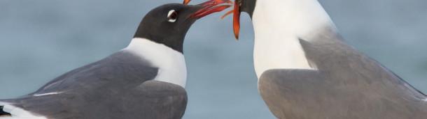 一号站平台登录: 海鸥或海鸥:谁在乎?