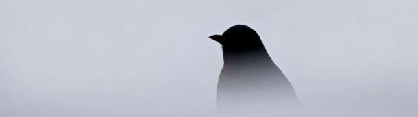 你能辨1号站注册认出这些令人毛骨悚然的叫声背后的鸟吗?