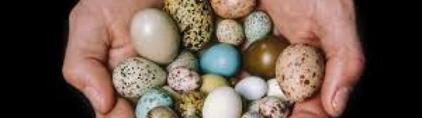 一号站官方: 关于鸟蛋
