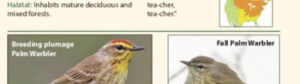 一号站平台登录:北美新鸟类指南
