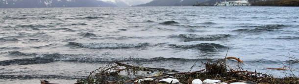 一号站注册登录: 在阿拉斯加,饥饿的海鸟和空无一人的种群标志着生态系统的破坏