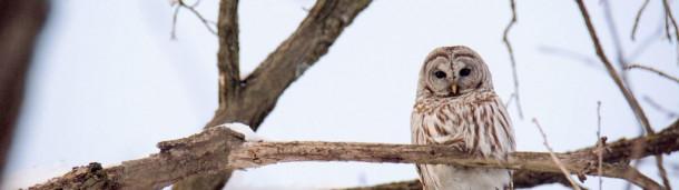 一号站注册登录: 西弗吉尼亚州的蛾人是猫头鹰吗?
