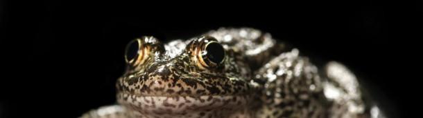 一号站官方: 卡瓦诺的确认时间对于野生动物受到气候变化威胁的案例至关重要