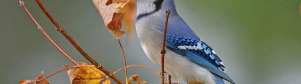 一号站注册登录:报名参加圣诞鸟数