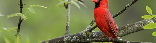 一号站官方: 鸟能活多久?