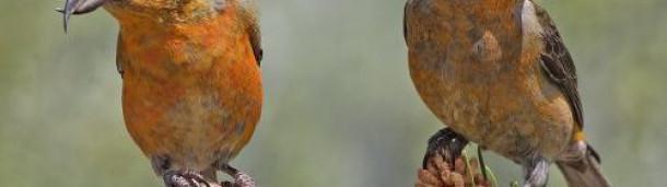 一号站注册登录: 这只奇特的鸟是一位舞蹈大师