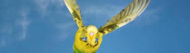 一号站官方: 鸟儿怎么能如此轻松地飞翔
