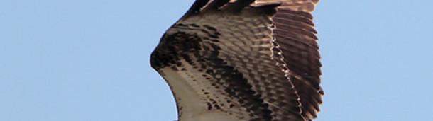 一号站注册登录: Hawkwatch季