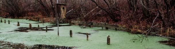 一号站平台登录:来看看美国最古老和最大的鸟类统计中心