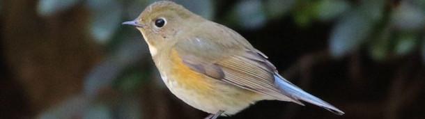 一号站平台登录: 我第一次看到稀有鸟类时的野外记录
