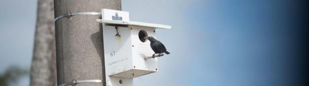 一号站平台登录:椋鸟是让关岛森林再次歌唱的关键吗?