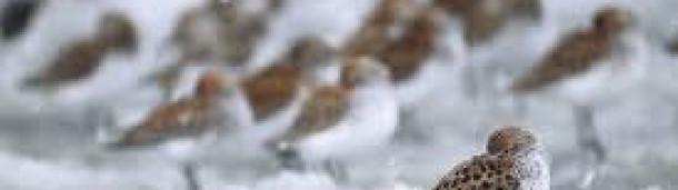 1号站注册: 由于奇怪的气候变化,水鸟的繁殖季节很惨淡