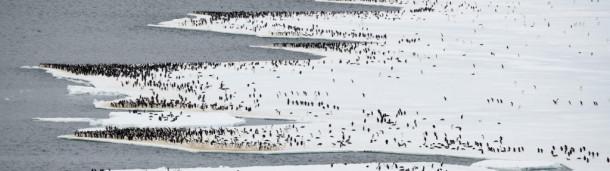 一号站注册登录: 跟随阿德利企鹅进入漫长的极地之夜