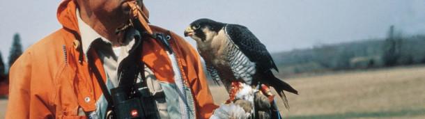 一号站官方:请听汤姆·凯德回忆拯救游隼的关键时刻