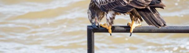 1号站注册: 这就是为什么鸟用喙摩擦东西
