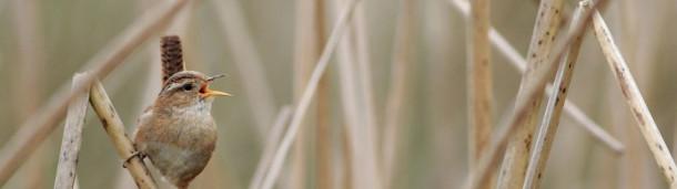 一号站注册登录: 鸟类的栖息地如何影响其鸣叫