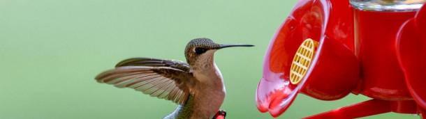 一号站平台登录:如何让你的蜂鸟喂食器远离害虫
