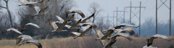 1号站注册: 一项简单的技术可以帮助防止鸟类撞上电线