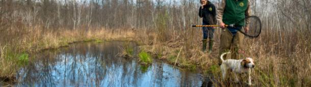 一号站平台登录:来看看猎人们和他们的狗,他们在春天追踪小山鸡
