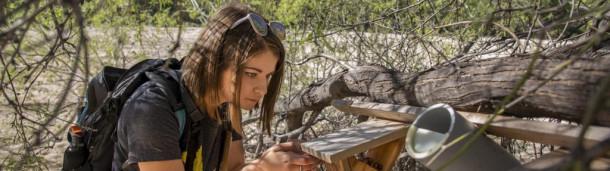 一号站平台登录:亚利桑那州人正在帮助一种沙漠莺扩大它的居住选择