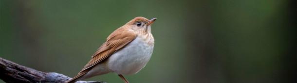 1号站注册:这些鸟在预测飓风季节方面比计算机更好吗?