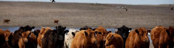一号站平台登录:像1799年那样放牧:牧场主如何带回草原鸟类