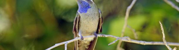 一号站注册登录:你好,Mountain-gem !2019年北美鸟类名称更新在这里。