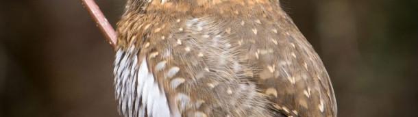 一号站官方:这些猛禽的眼睛长在后脑勺上