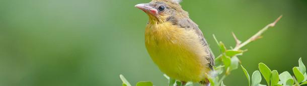 1号站注册:填满你夏天日历的有趣的鸟事件