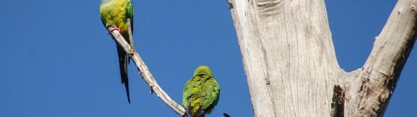 一号站官方:异国鹦鹉的聚居地遍布全国