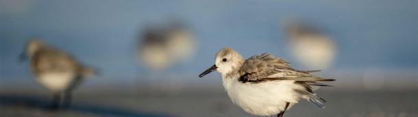 一号站官方:五种受气候威胁的鸟类以及你如何帮助它们