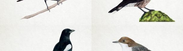 一号站官方:让我们先来看看《翼展》的下一步计划,一款扣杀棋盘游戏