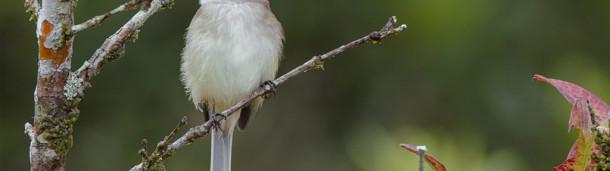 一号站平台登录:在Netflix的一部新片中,美墨边境将鸟类和人类聚在了一起