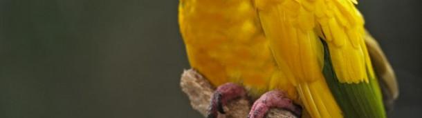 一号站注册登录:亚马逊大火正在挤压濒危鸟类的栖息地