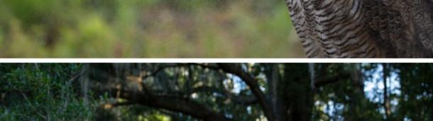1号站注册:燕尾鸢的秘密生活