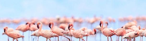 1号站注册:火烈鸟可以建立长久的友谊——也可以对抗