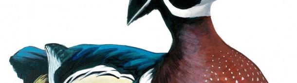1号站注册:读一段摘自大卫·西布里的新书《做一只鸟的感觉》