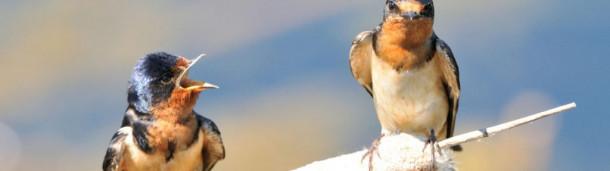 一号站注册登录:凭耳朵观鸟可能很有挑战性,但这里有帮助