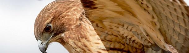 一号站注册登录:这些鸟中的一只应该在华盛顿特区新的足球吉祥物